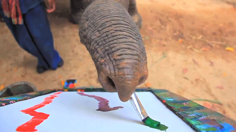 Can Elephants REALLY Paint?
