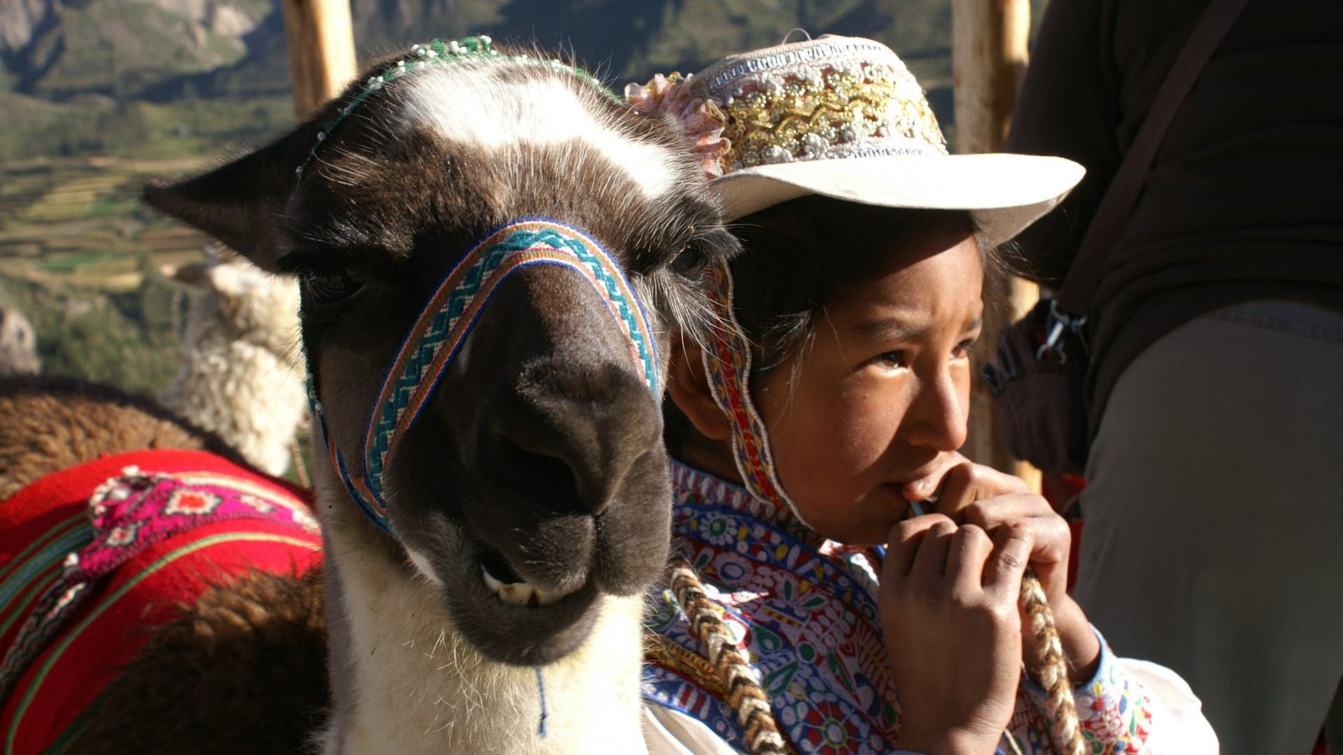 High in the Andes, alpacas often live among the artisans, they are pets and a source of livelihood, producing yarns for the finest apparel.